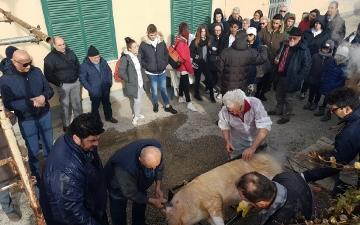 Rituale dell'ammazzamento del maiale a Lentella